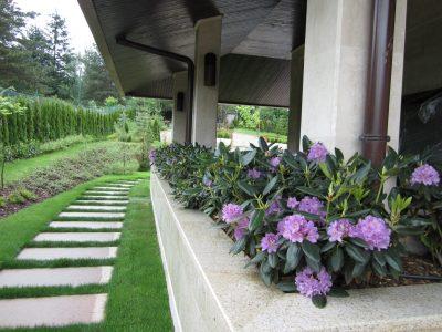 Озеленяване на двор, Камбаните